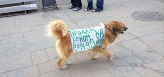 Собака-продавака
